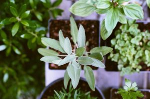 New Ways to Use Fresh Herbs