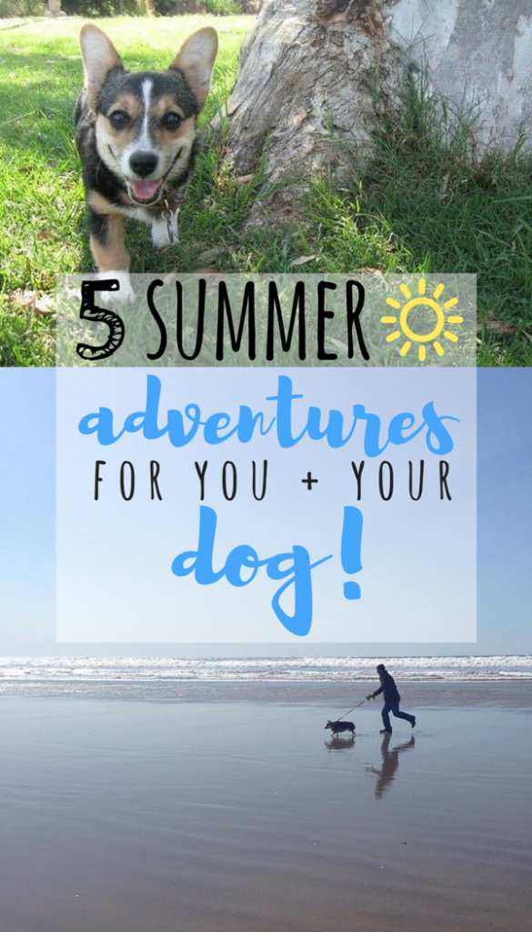 adventures with your dog