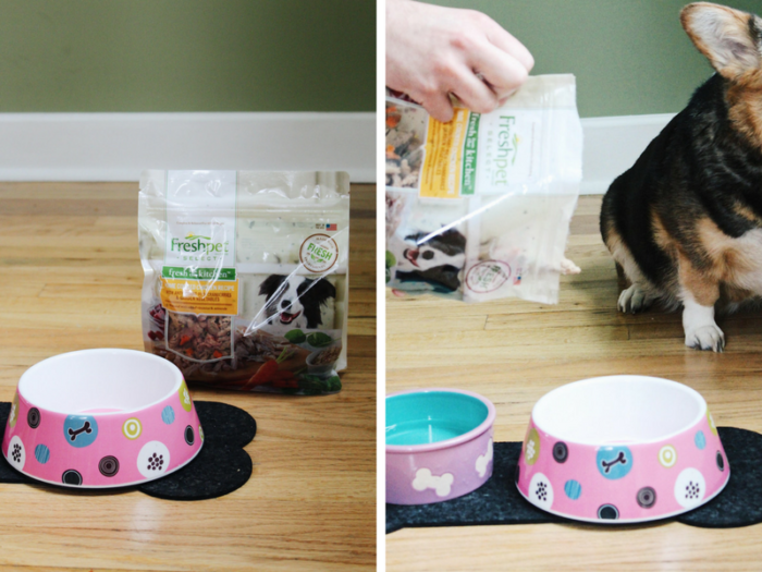 healthy foods that you can share with your dog