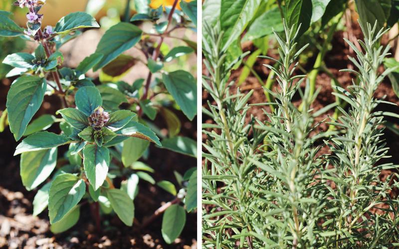 Bone Broth Gazpacho with Garden Herb Pesto
