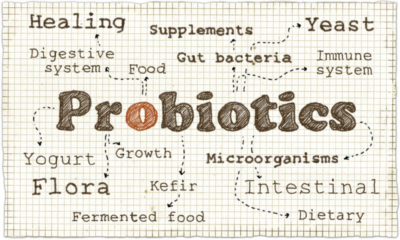 The Best Probiotic Strains for Your Gut