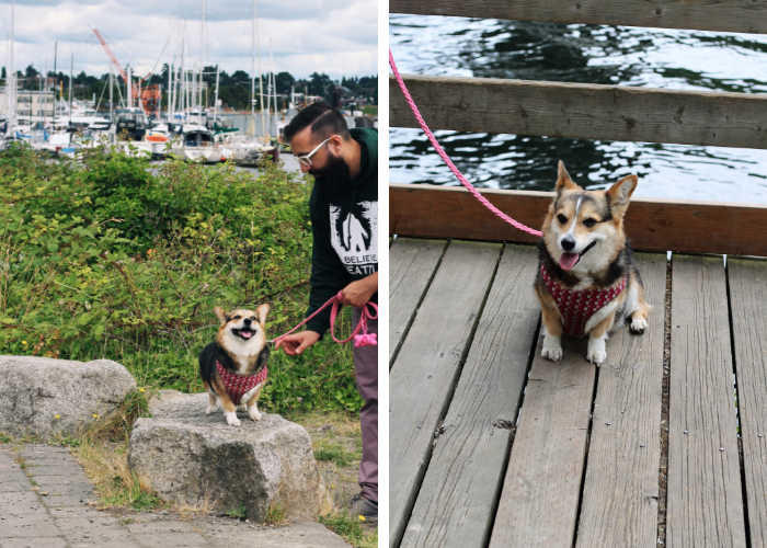 dog friendly Seattle