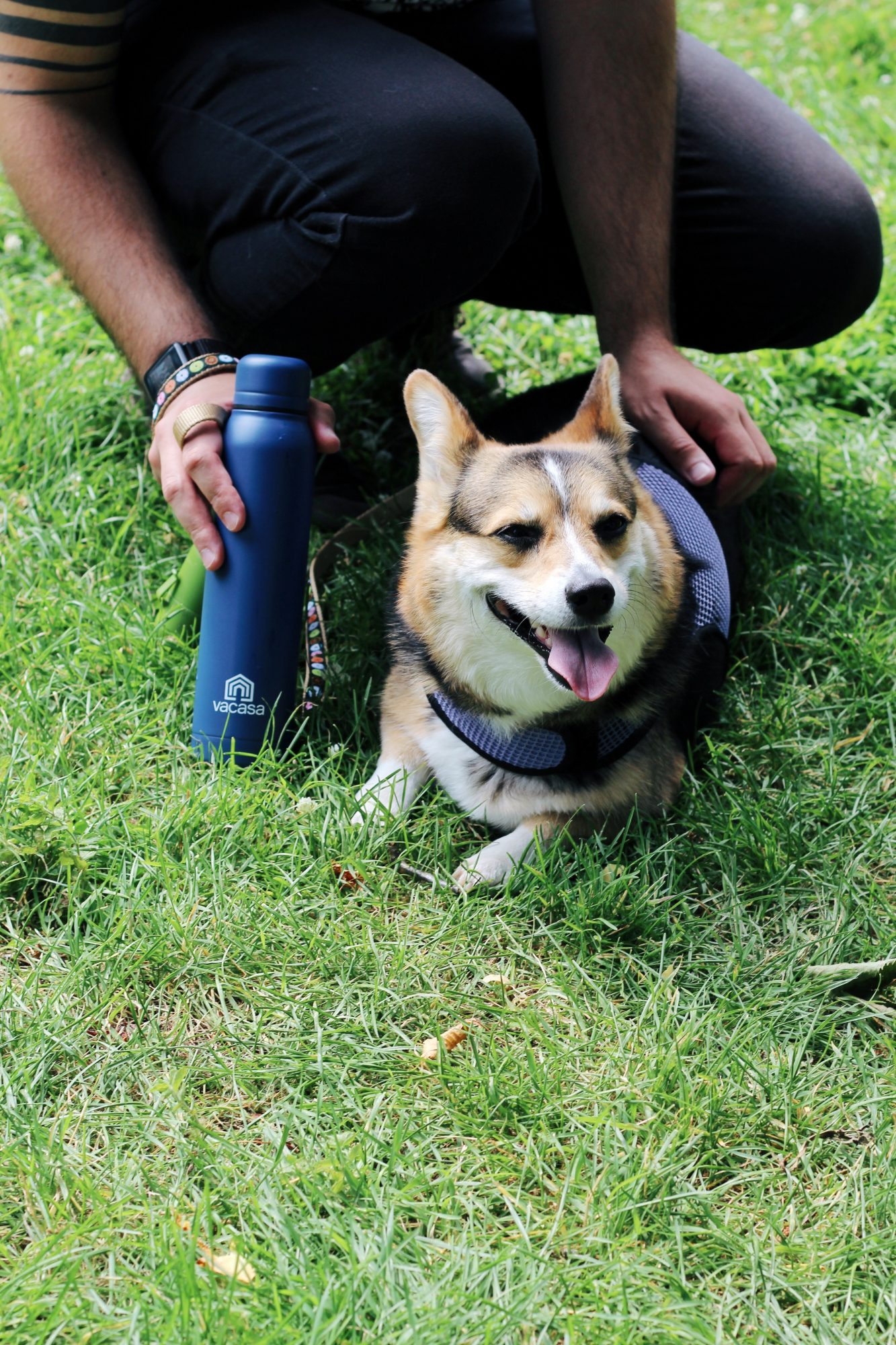 Pet-friendly traveling is easy when you're prepared