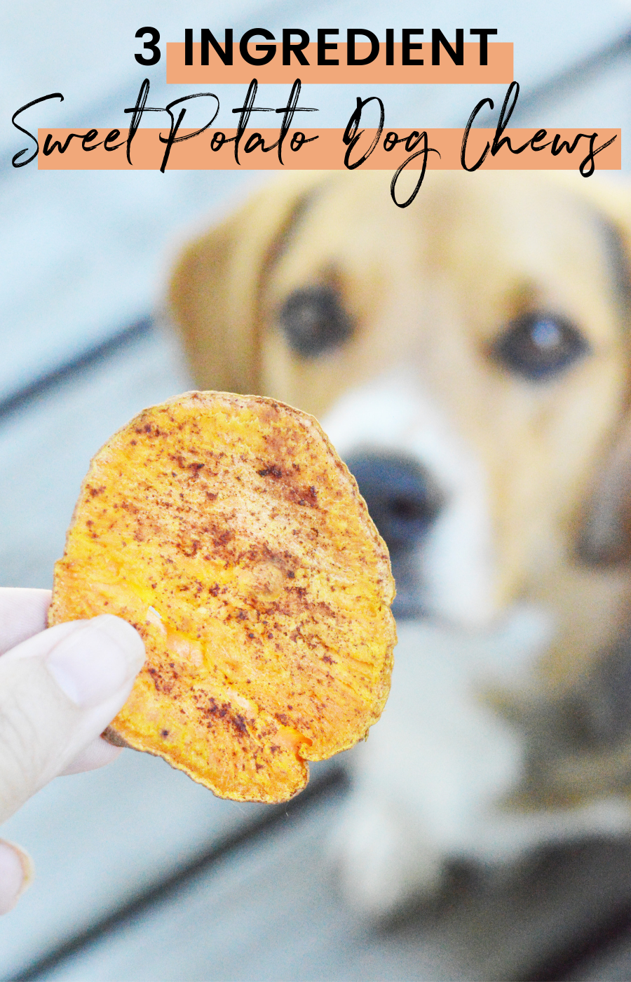 homemade sweet potato treats for dogs
