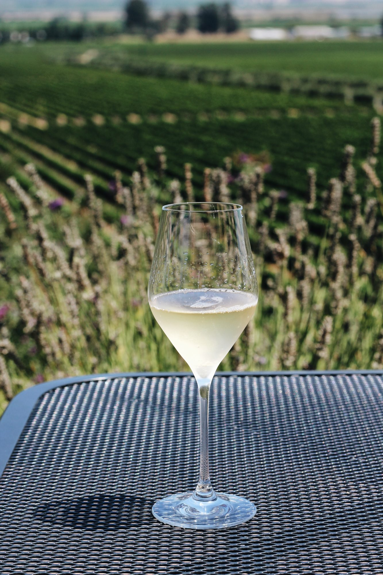 visit Gloria Ferrer in Sonoma for a day of sipping sparkling wines