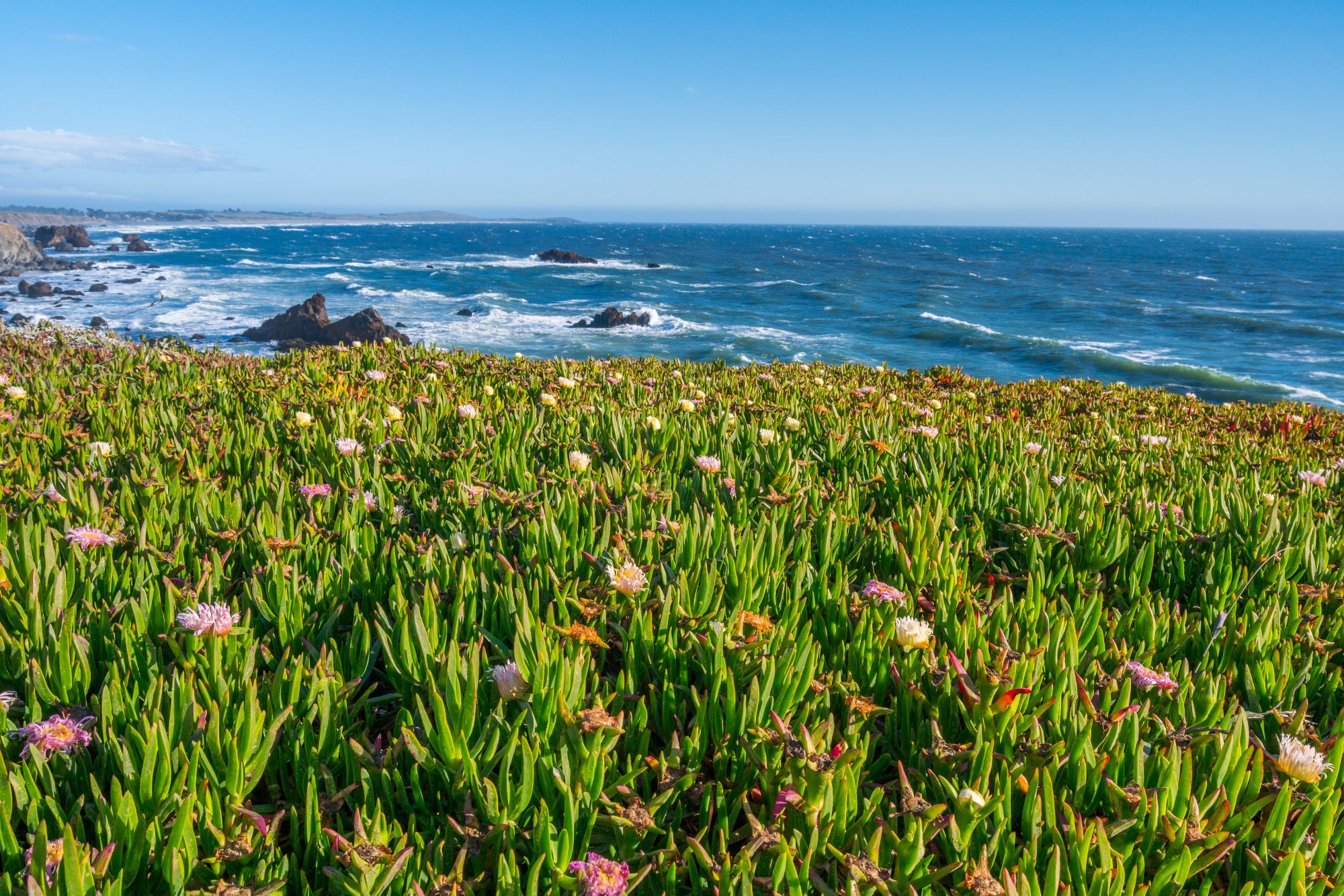 visit the coast on your Wine Country trip