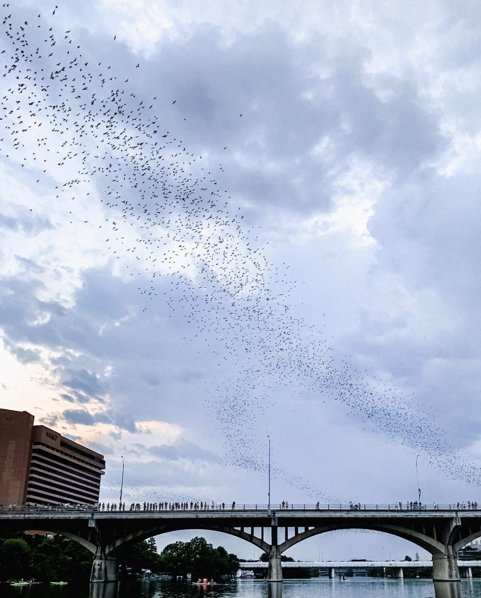 watching the Congress Bridge bats is one of the best things to do in Austin