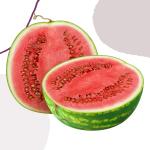 Watermelon is a powerful immune boosting food