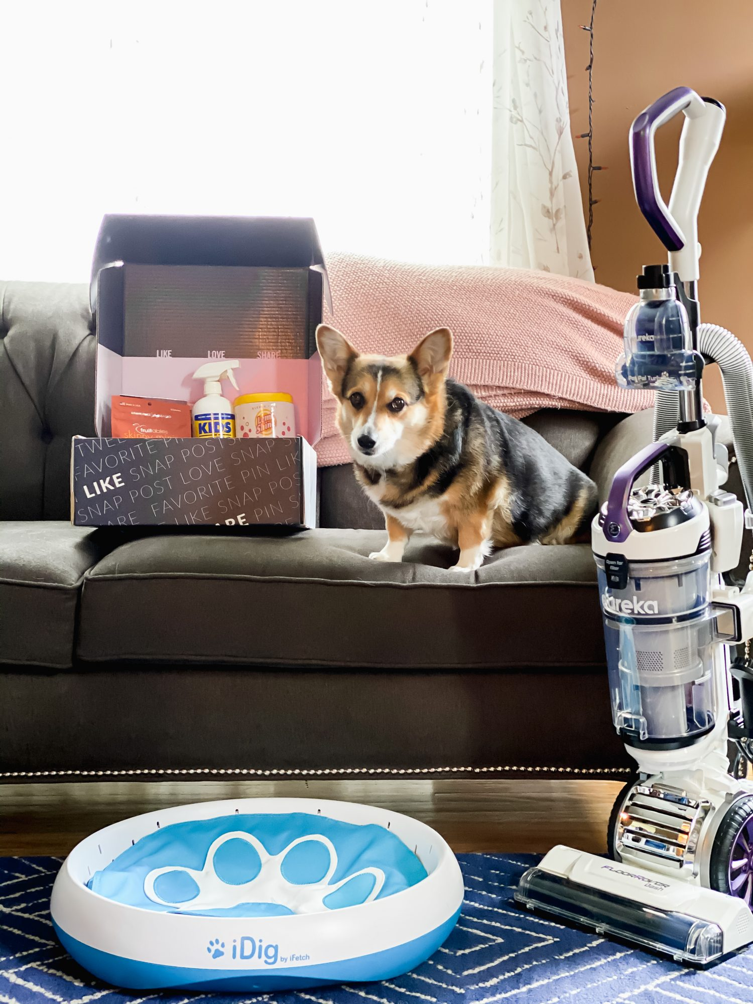keeping your home clean with dogs