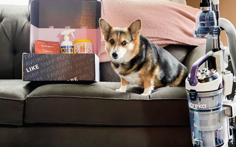 10 Tips for How to Keep Your House Clean With Dogs